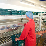 Axiom GB's conveyor system at Tamar Foods