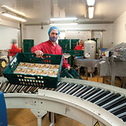Tamar Foods - placing the product on the Axiom GB conveyor system