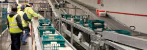 Crates moving on conveyor at Tamar Foods